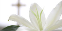 Easter Lily Orders